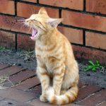 猫の嘔吐!散歩で雑草を食べたら吐いた!衛生面は大丈夫なの?