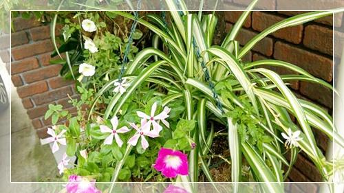 玄関観葉植物