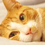 猫が泡とよだれを出している原因は?病院には連れていくべき?