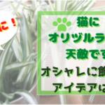 オリヅルランは猫ちゃんの天敵です!安全にオシャレに飾れるアイデアはコレ!