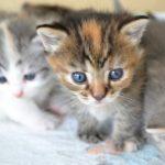 猫の多頭飼いは難しいの?新しい猫ちゃんを上手く迎える方法