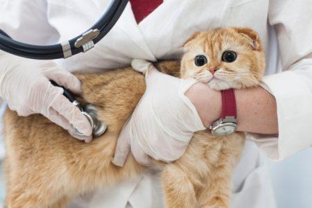受診する猫