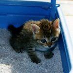 猫が嘔吐と下痢で食欲不振に!考えられる病気や原因は何なの?
