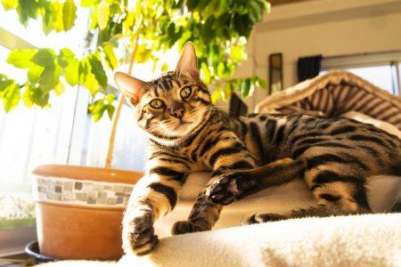 観葉植物と猫