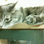 病気で元気のない猫