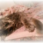 猫が胃液を吐くのはどうして?食欲ないときに考えられる病気とは?