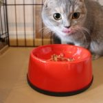 猫の早食い防止食器で食べる猫