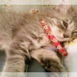 可愛い子猫にくびったけ!捨て猫の育て方実践記(=^..^=)ミャー