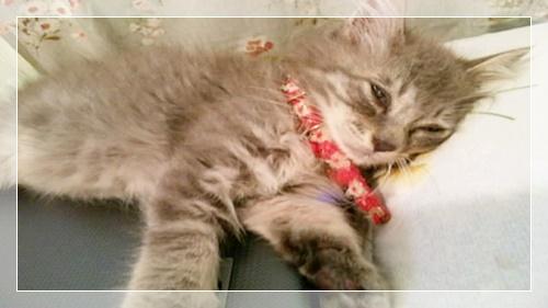 熟睡している子猫のりん