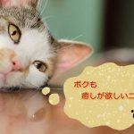 【動画あり】東京の猫カフェ♪吉祥寺のきゃりことてまりのおうち