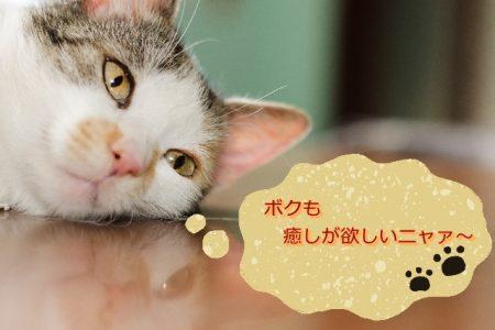 猫ふきだし