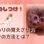 猫をしつけたらおすわりを覚えられる?簡単にできる驚きの方法とは?