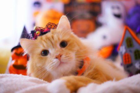 ハロウィンどアップの猫