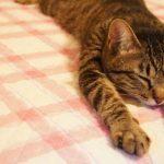 老猫の嘔吐が止まらない!餌を食べないときは危険な兆候かも!?