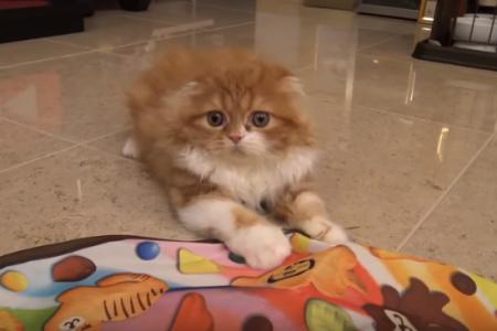 ヒカキンの猫電動おもちゃ