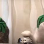 笑わずにはいられない!腹がよじれる おもしろ猫動画18連発♪