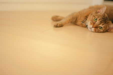 フローリングに寝そべる猫