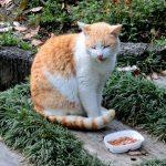 公園でキャットフードを食べている猫