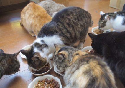 猫の多頭飼い