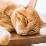 これで納得!猫がテーブルの上に乗るのはなぜ?しつけ方を徹底解説