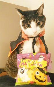 ハロウィンのマントを羽織った猫