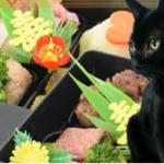 豪華絢爛!猫用おせちの通販ショップ!早めに注文がかしこい方法