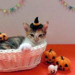 ハロウィンのかご猫