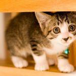 猫が嘔吐して震えているけど大丈夫?原因と考えられる病気とは?