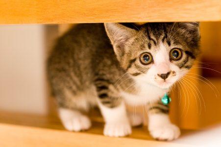 震えている猫
