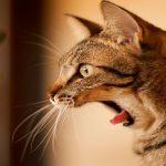猫がきゅうりを見るとびっくりするのは?おもしろ動画まとめ♪