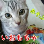 【新しいおもちゃ】猫に人気らしいあのおもちゃを試してみた!