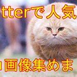 【ネコ好き必見】Twitterで人気の猫画像集めました!