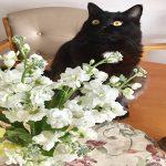 猫に安全な花やハーブが知りたい!切り花なら飾っても大丈夫なの?