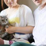 共働きで猫を飼う場合エサやりはどうする?吐く原因はあげる間隔だった!