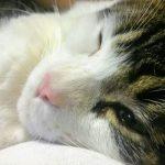 猫がキャットフードでアレルギーになる原因は?今すぐ知りたい対策法