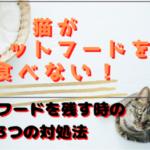 猫がウェットフードしか食べない!ドライフードを残す時の3つの対処法