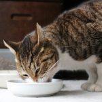 猫はウェットフードが大好き♪知っておくべきメリットとデメリット!