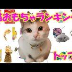 猫おもちゃランキングトップ3!【ネコ吉大興奮の3つの玩具】Top 3 cat toys! [Neko-kichi's best 3 toys]