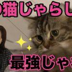 ねこを発狂レベルで夢中にさせる猫おもちゃ。しかもオシャレ。